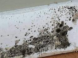 black mold (2).jpg