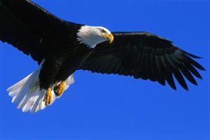 eagle-3782518_1920-300x200